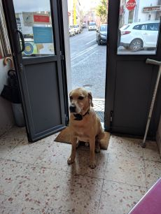 The cafe owner's dog who would slowly sneak in.